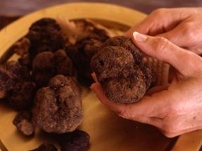 Brossage des truffes