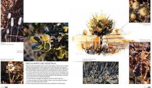 truffe-valensole-martino-arbefeuille-divers