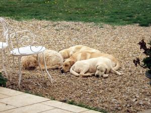 Après l'effort… la sieste !