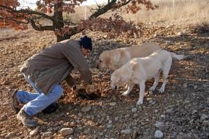 La recherche avec les chiens